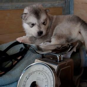 Segundo cachorro, 20 días